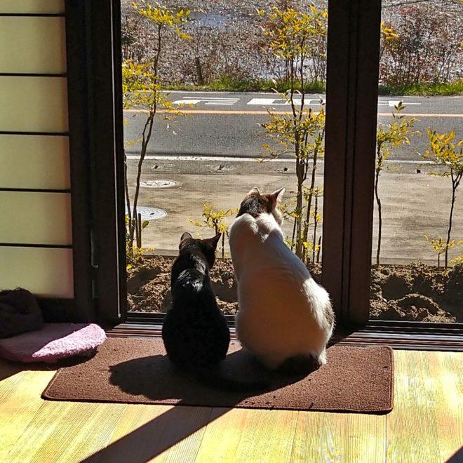 在宅ワークと愛猫たち