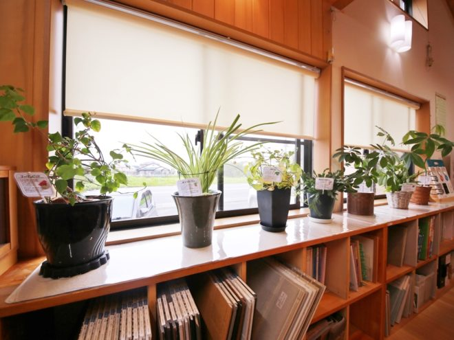 空気清浄に観葉植物!
