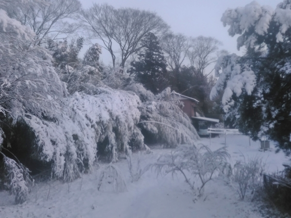 1/23朝 自宅周辺の雪景色